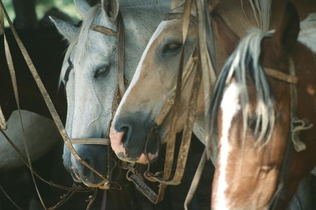 Élevage de chevaux : Le pour et le contre de l'élevage de chevaux